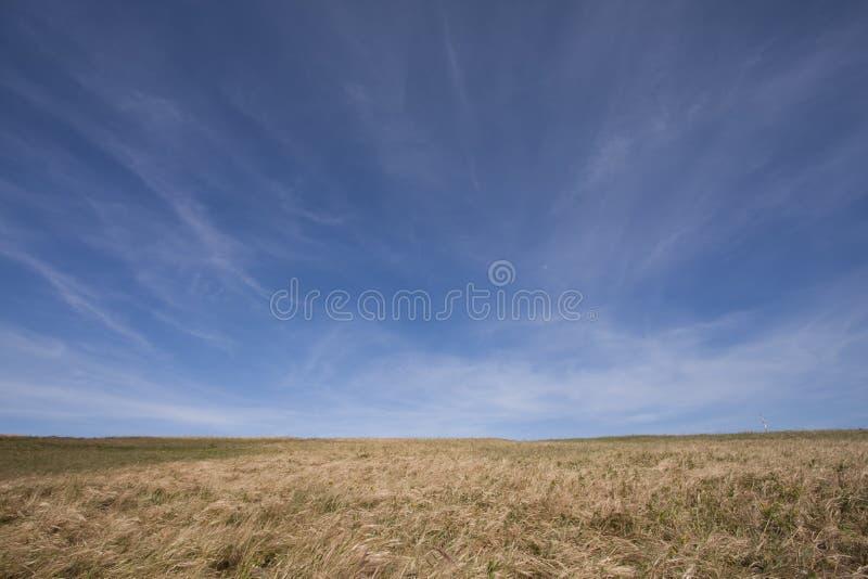 paesaggio del campo fotografie stock