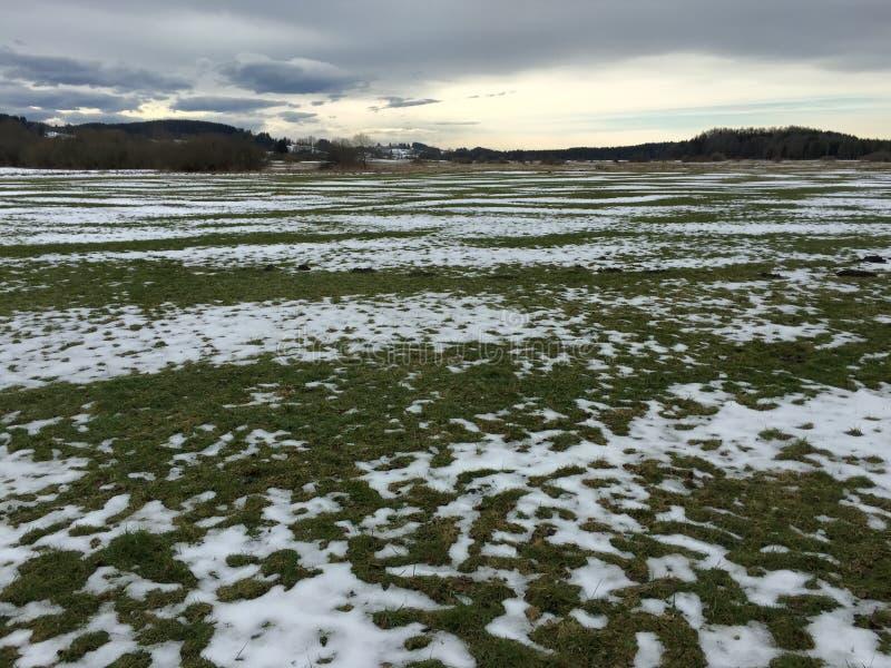 Paesaggio del campo verde coperto di neve immagine stock