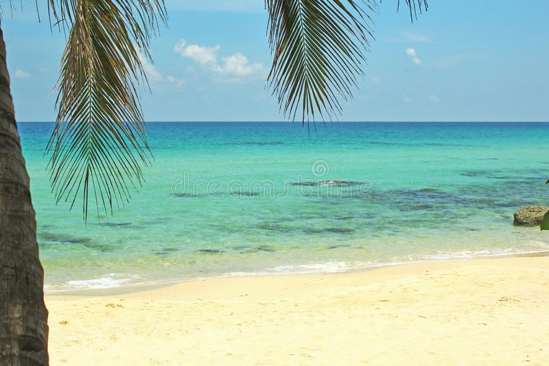 Paesaggio del cielo della palma della sabbia di Coral Sea Tropical Wild Beach immagini stock libere da diritti