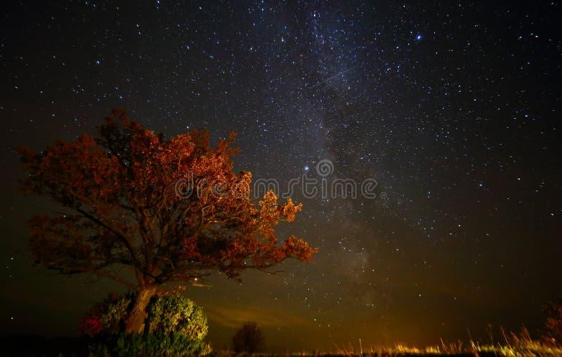 Paesaggio del cielo notturno con la vecchia quercia immagine stock libera da diritti