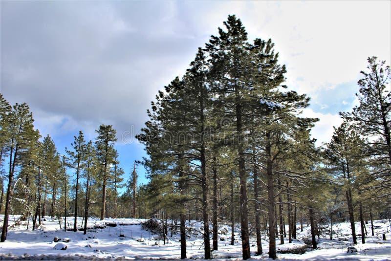 Paesaggio del paesaggio, 17 da uno stato all'altro, albero per bandiera a Phoenix, Arizona, Stati Uniti fotografia stock