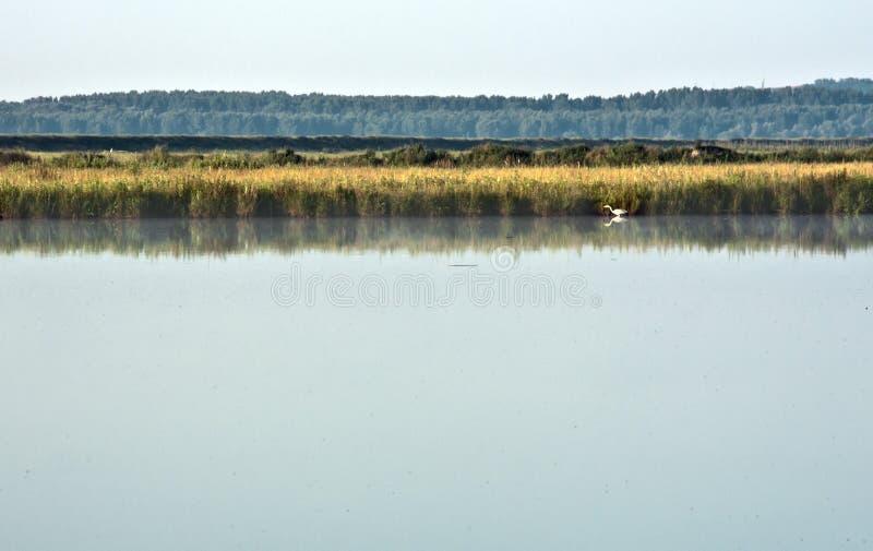 Paesaggio del Danubio con un uccello su acqua fotografia stock