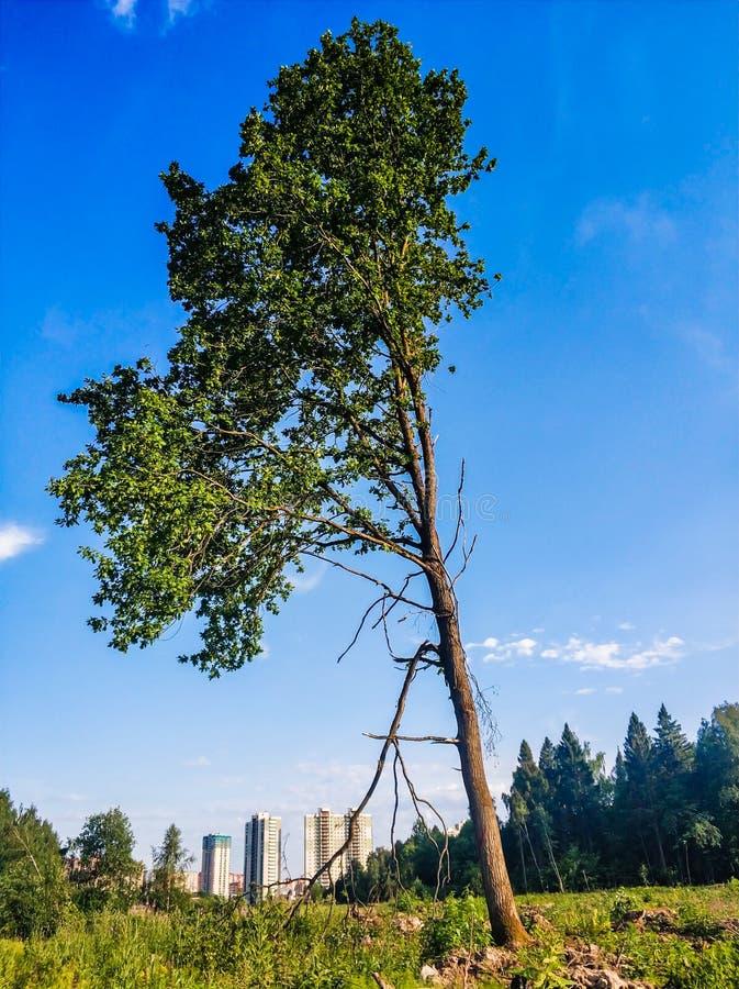 paesaggio del paesaggio dell'albero solo del supporto sul campo di erba fotografia stock