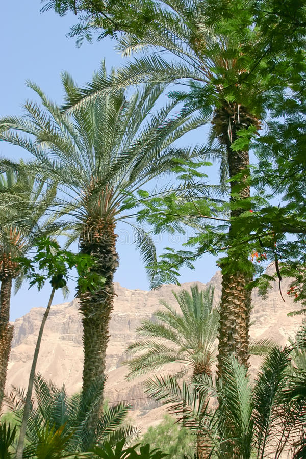 Paesaggio del deserto immagini stock libere da diritti