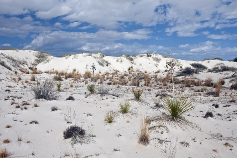 Paesaggio del deserto del New Mexico immagine stock libera da diritti