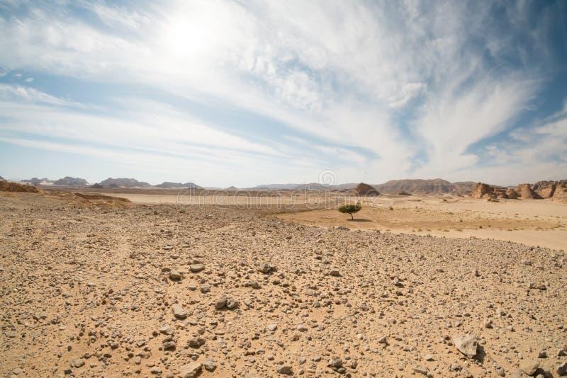 Paesaggio del deserto, Egitto, Sinai del sud fotografia stock