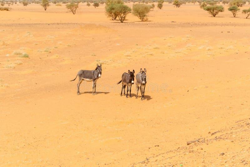 Paesaggio del deserto nel Sudan fotografie stock libere da diritti