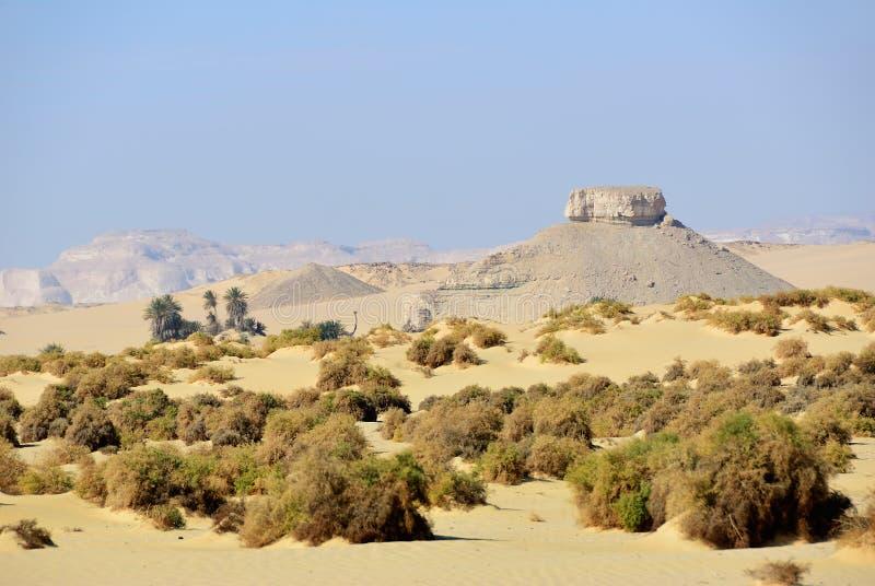 Paesaggio del deserto occidentale Sahara, Egitto immagine stock libera da diritti