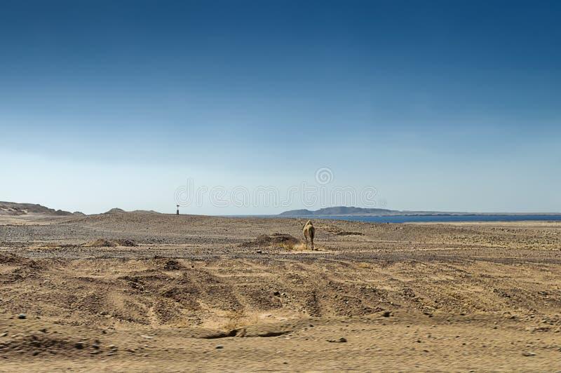 Paesaggio del deserto sulla costa del Mar Rosso fotografia stock
