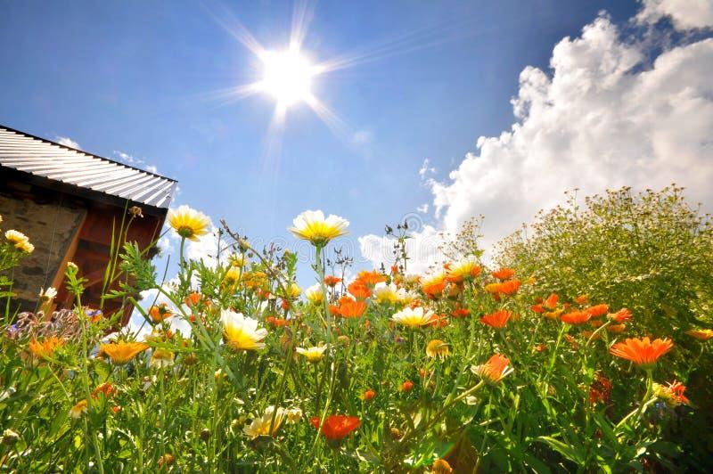 Paesaggio del fiore con il sole immagini stock