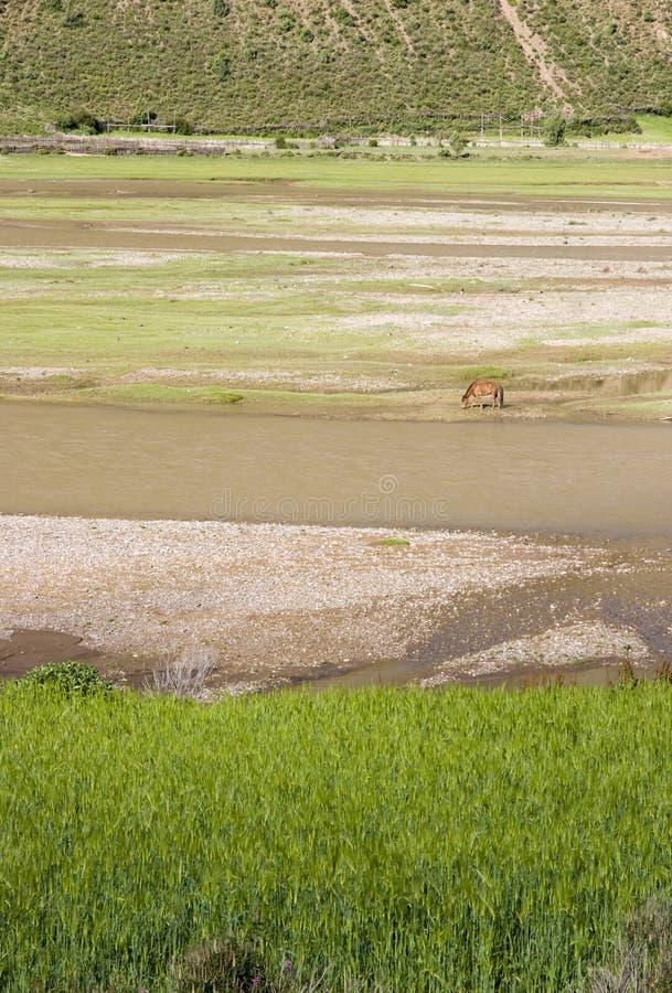 Paesaggio del fiume e dell'azienda agricola immagine stock libera da diritti
