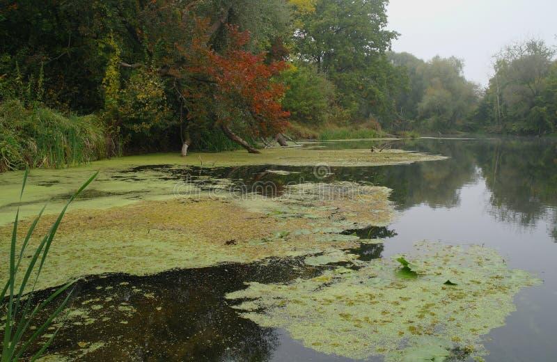Paesaggio del fiume e legno di autunno immagine stock libera da diritti