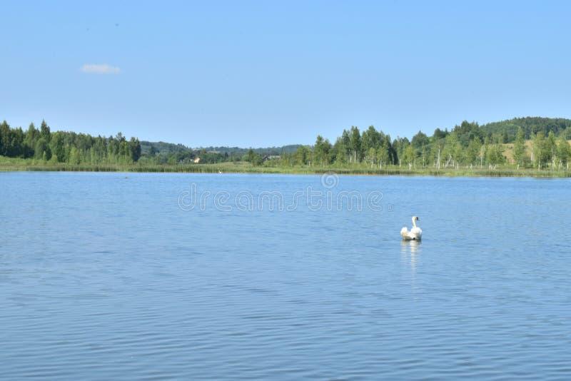 Paesaggio del lago con il cigno immagini stock