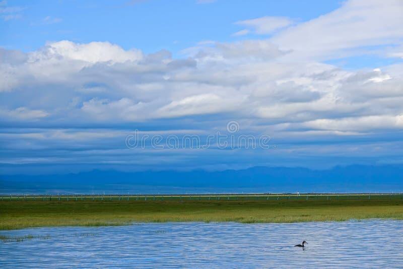 Paesaggio del lago qinghai immagini stock