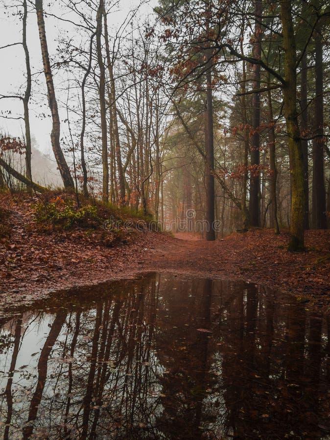 Paesaggio del legno all'autunno immagine stock libera da diritti