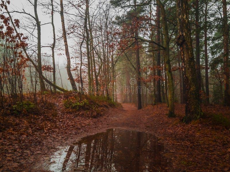 Paesaggio del legno all'autunno fotografia stock