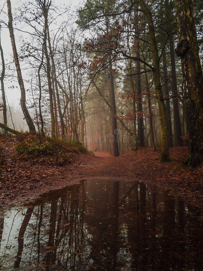 Paesaggio del legno all'autunno immagini stock libere da diritti