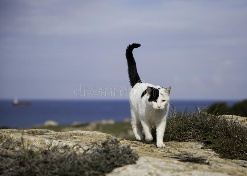 Paesaggio del mare con il gatto fotografia stock libera da diritti