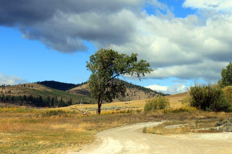 Paesaggio del Montana fotografie stock