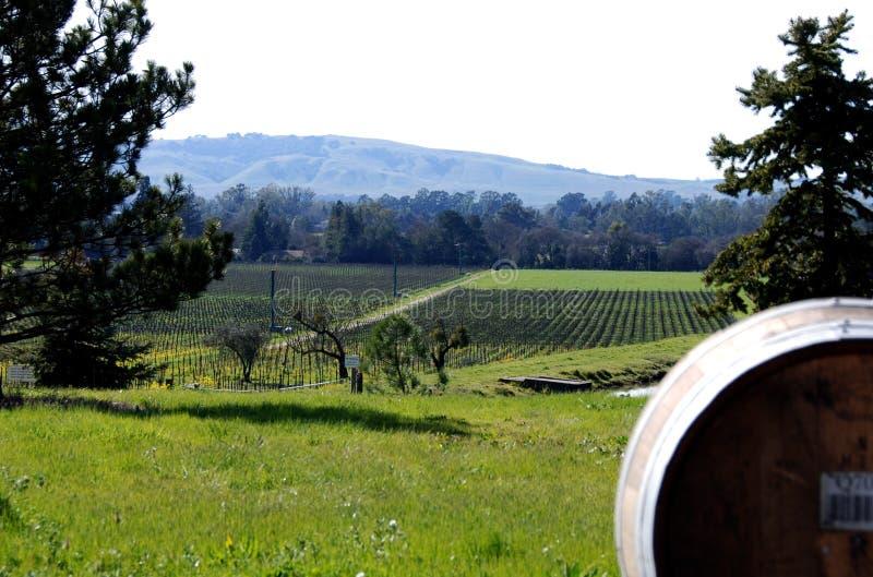 Paesaggio del Napa Valley fotografie stock libere da diritti