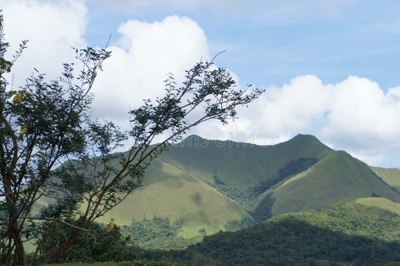 Paesaggio del Panama - montagne verdi fotografie stock