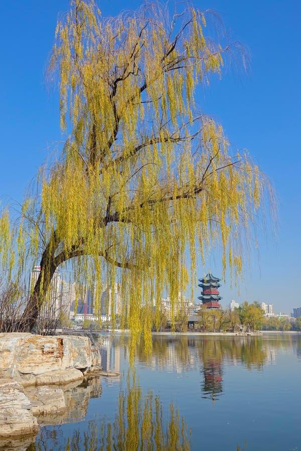 Paesaggio del parco della città fotografia stock