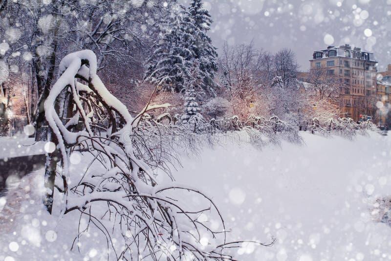Paesaggio del parco della città di inverno Alberi gelidi in parco Alberi innevati Fondo di caduta della neve fotografia stock libera da diritti