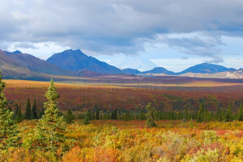 Paesaggio del parco nazionale di Denali fotografia stock libera da diritti