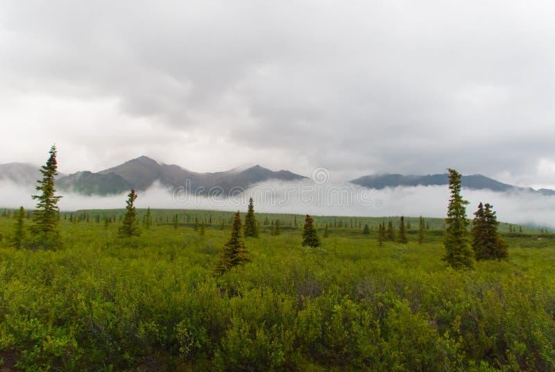 Paesaggio del parco nazionale di Denali fotografia stock
