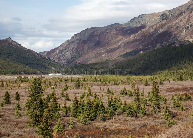 Paesaggio del parco nazionale di Denali immagini stock libere da diritti