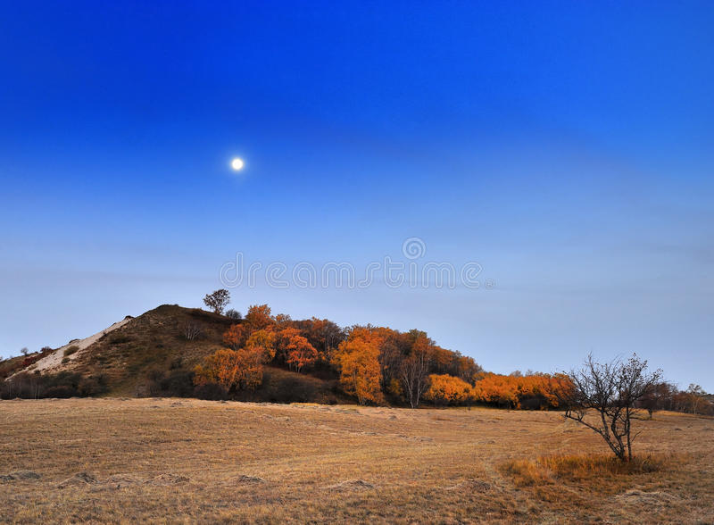Paesaggio del pascolo della Cina Bashang fotografia stock