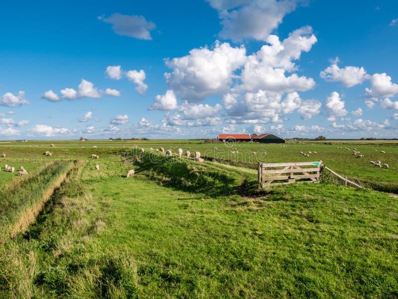 Paesaggio del ploder con il pascolo le pecore, diga, pascolo e del farmhou fotografia stock libera da diritti
