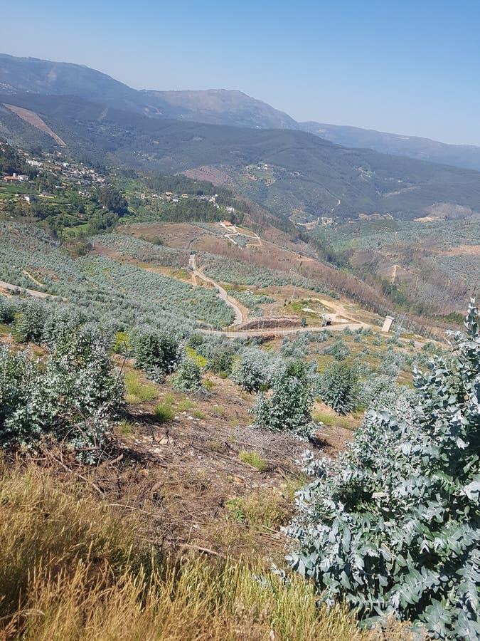 Paesaggio del Portogallo fotografia stock