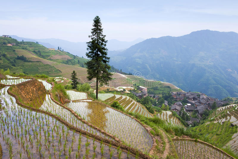 Paesaggio del terrazzo del riso in Cina immagini stock libere da diritti