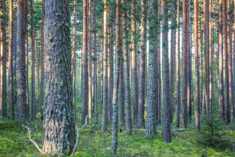 Paesaggio del terreno boscoso immagine stock libera da diritti