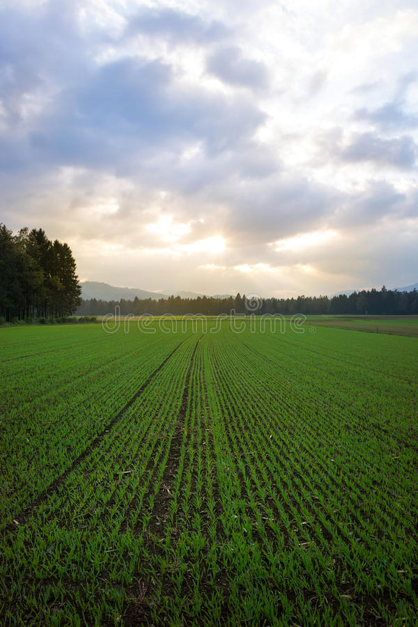 Paesaggio del terreno coltivabile fotografia stock
