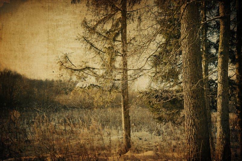 Paesaggio del vinter dell'annata fotografia stock libera da diritti