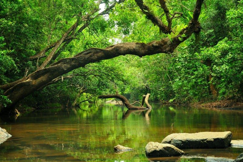 Paesaggio dell'albero immagini stock