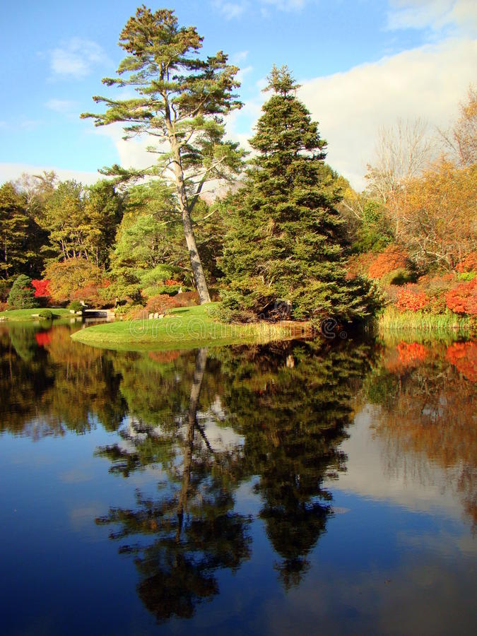 Paesaggio dell'albero attraverso il giardino dell'azalea di Asticou, Maine immagine stock