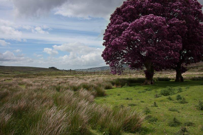 Paesaggio dell'albero (in bianco e nero) immagine stock