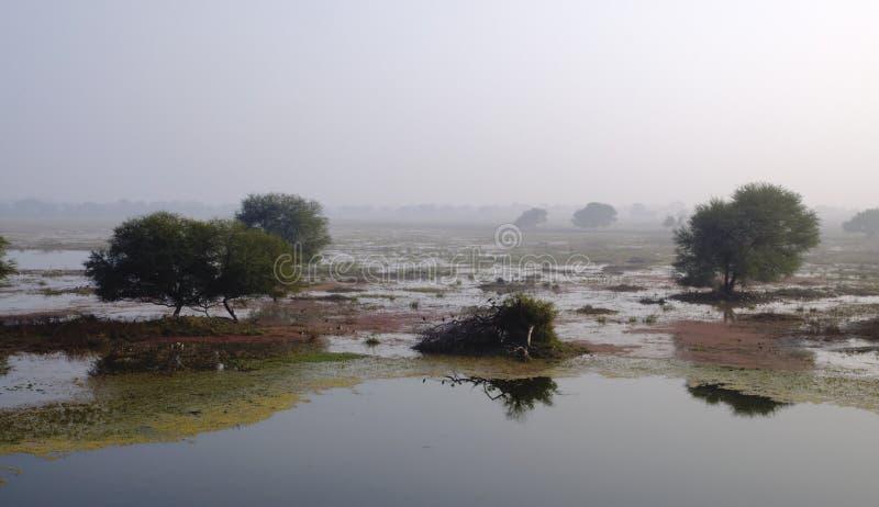Paesaggio dell'area umida immagini stock libere da diritti