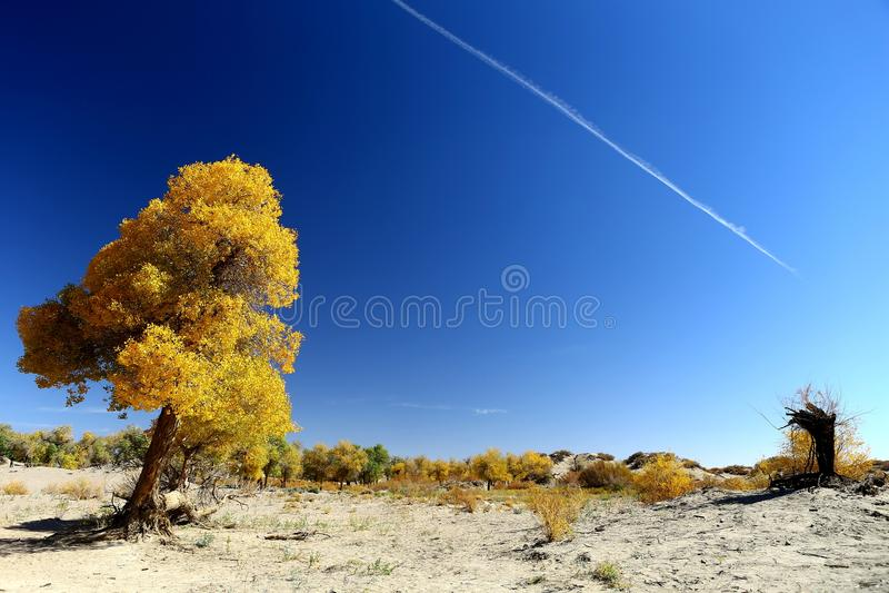 Paesaggio dell'insegna di Ejin fotografia stock