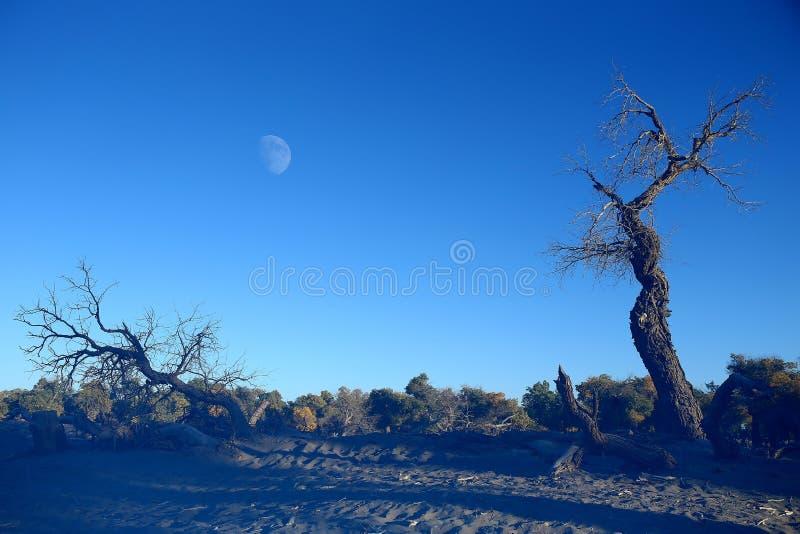 Paesaggio dell'insegna di Ejin fotografie stock libere da diritti