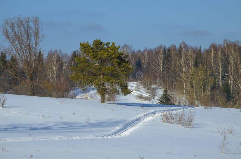 Paesaggio dell'inverno di legno in Siberia immagini stock libere da diritti