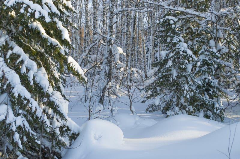 Paesaggio dell'inverno nel legno fotografia stock