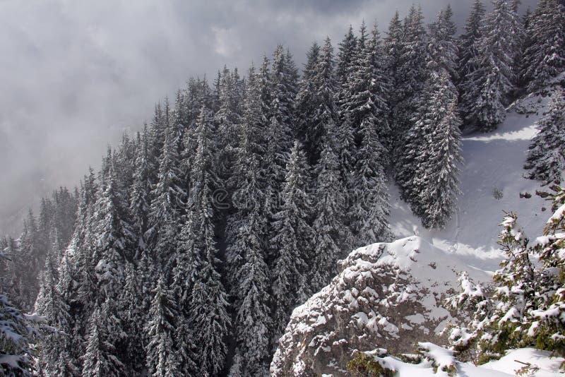 Paesaggio dell'inverno nelle montagne - annebbi i pini circostanti immagine stock