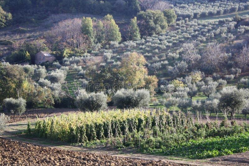 Paesaggio dell'italiano del paese fotografia stock