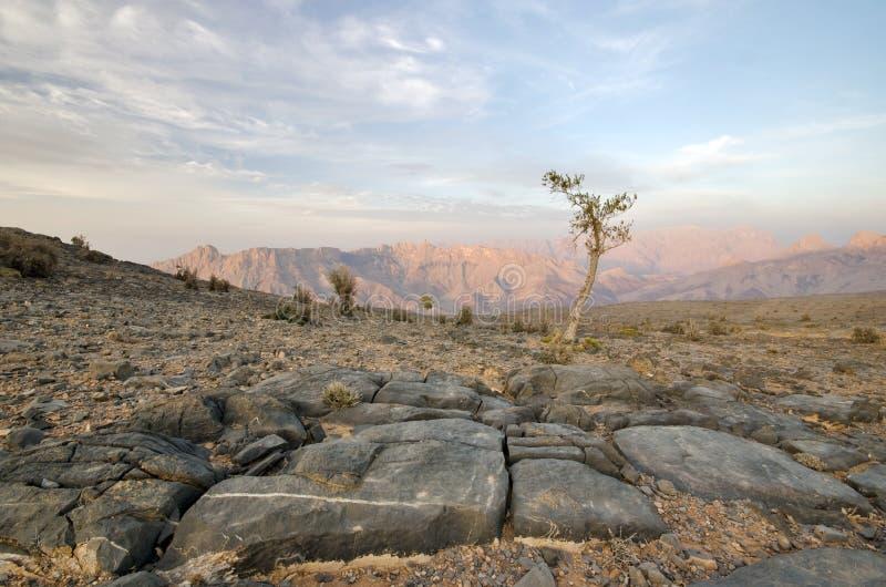 Paesaggio dell'Oman fotografie stock libere da diritti