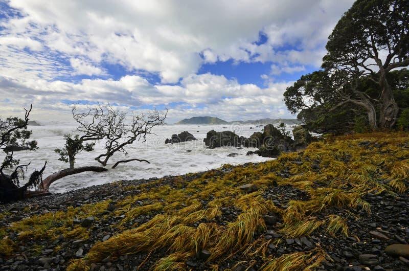 Paesaggio della baia di Waihau fotografia stock