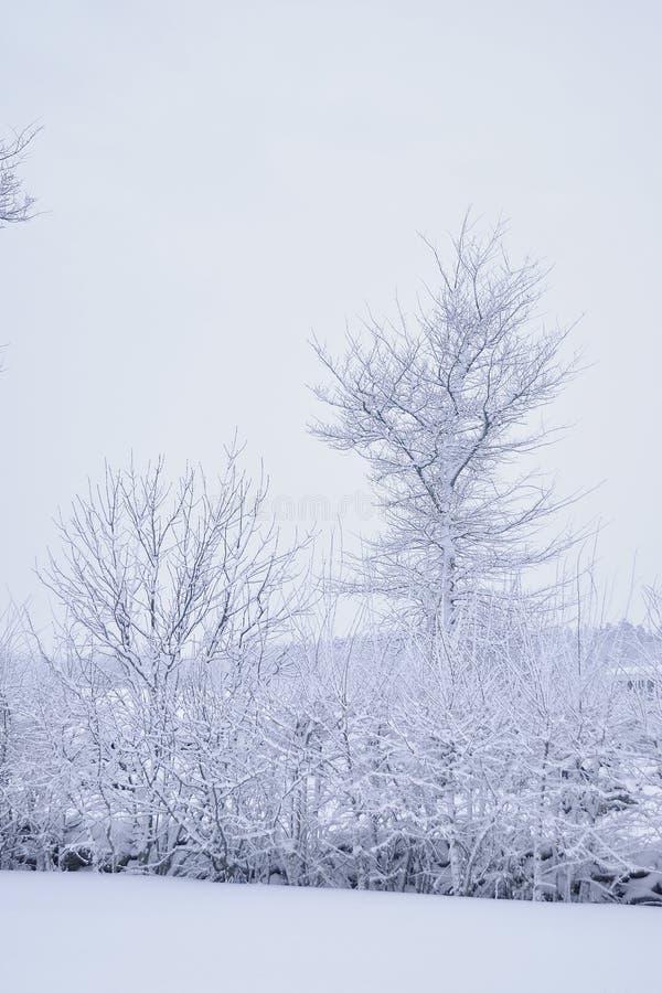 Paesaggio della campagna di Snowy fotografia stock